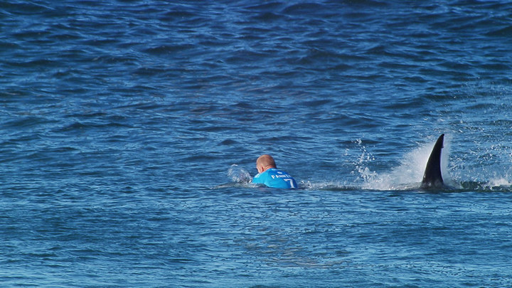 белая акула нападает на человека видео