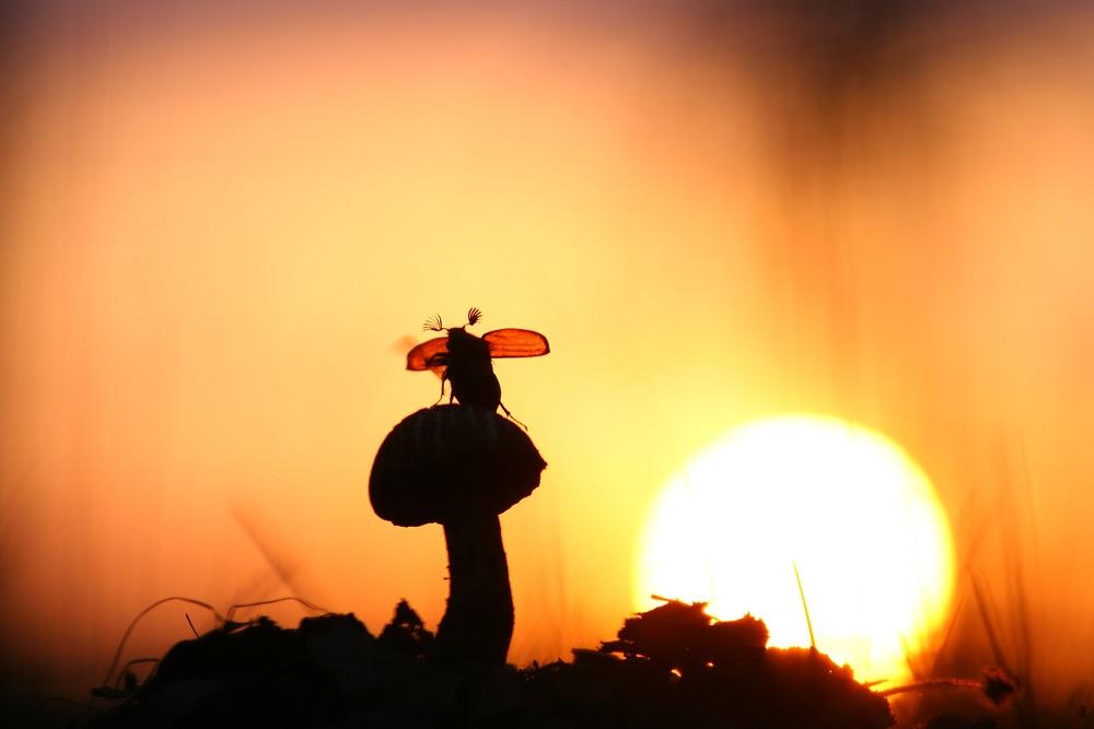 Картинки по запросу фото природи переможці