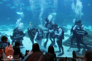 Georgia-Aquarium-hosts-underwater-wedding-with-sharks-as-guests (4)