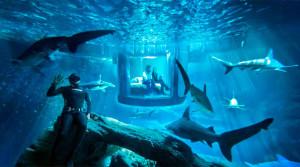 спальня акулы