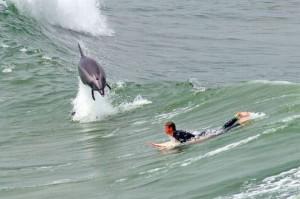 Серфинг с дельфином