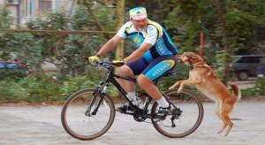 Как защититься от собак во время езды на велосипеде