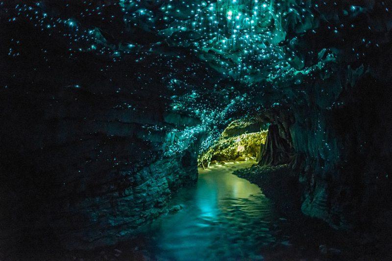Новозеландская пещера «Waitomo Glowworm Cave»