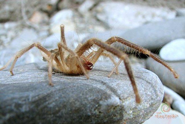 4 фото паукообразные укус