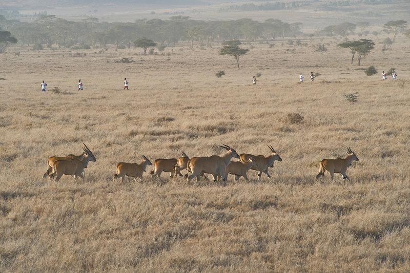 марафон-safaricom