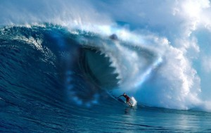 Двое сумасшедших прокатились верхом на акуле