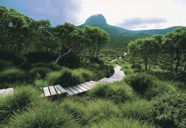 Надземная тропа (Австралия)