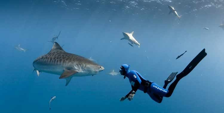 2 акула