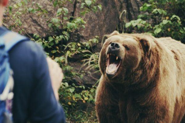 5 медведь нападает