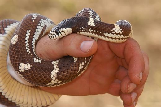 7 змея укусила